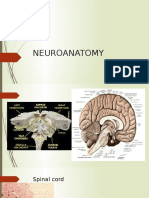 Neuro Anatomy