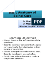 Basic Anatomy and Physiology of Brain and Spinal Cord