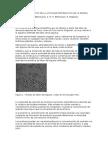 Estudio Cinetico de La Actividad Proteolitica de La Enzima