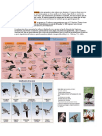 Las Aves No Voladoras