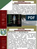 05 CICLOS BIOGEOQUIMICOS
