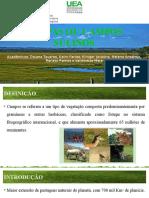 Seminário Oficial - Pampas Ou Campos Sulinos