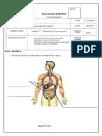 evaluación5toseresvivos.docx