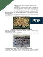 Langkah-langkah Pembibitan Sonneratia Caseolaris