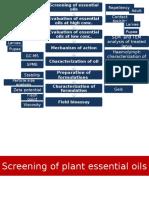 Mentha Oil Formulation