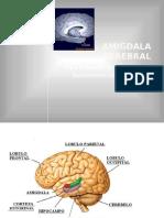 SNA - La Amígdala