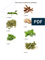 Plantas Medicinales Más Utilizadas en Guatemala
