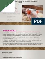 Administração Rural - Suínos (1)