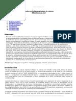 estudio-morfologico-tomate-cascara.doc
