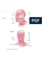 Musculos Fundament of Anatomy and Physiology for Student Nurses