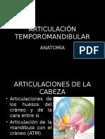 Anatomia de La Atm