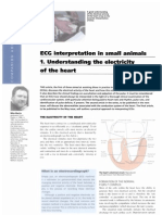 ECG interpretation in small animals