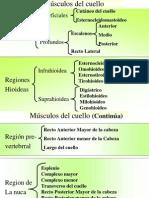 f)_Musculos_del_cuello