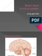 Brain stem - Copy.pptx