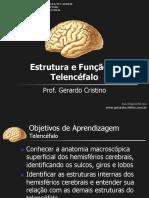 T7_Telencefalo