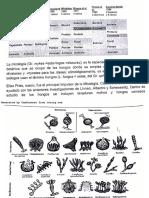 MICROBIOLOGIA 2 OBSERVACION DE LAS ESTRUCTURAS DE HONGOS FES ZARAGOZA QFB