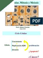 Clase Ciclo Celular