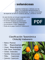 SOLANACEAS PRESENTACION.pptx