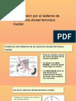 SENSIBILIDADES-SOMATICAS-Y-EL-DOLOR.pptx