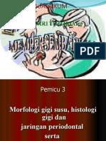 Anatomi Dan Morfologi Gigi Desidui