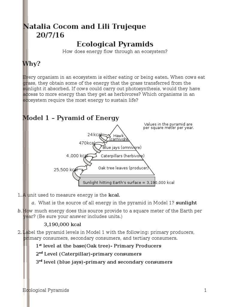 worksheet ecological pyramid worksheet grass fedjp worksheet study site. Black Bedroom Furniture Sets. Home Design Ideas