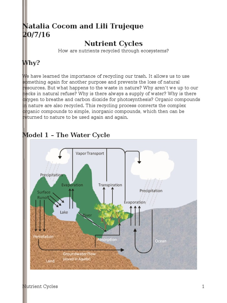 nutrient cycles pogilnatalia Carbon Dioxide – Water Carbon and Nitrogen Cycle Worksheet Answers
