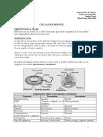 Guia-celula-procarionte.pdf