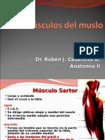 44.- Músculos de Región Anterior Del Muslo