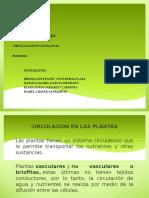 Diapositiva circulacion en plantas
