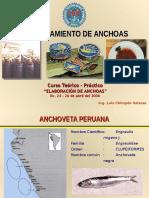 Anchoa - Ilo