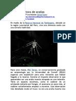 Araña Escultora de Arañas