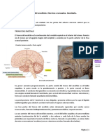 Tema-27-Anatomía.pdf