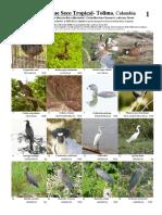Aves Bosque Seco