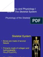 Anatomy Unit 7 - Physiology of the Skeletal System