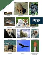 ANIMALES EN PELIGRO DE EXTINCIÓN.pdf