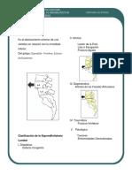 espondilolistesis.pdf