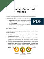 Tema 18. Reproducción Sexual, Meiosis
