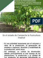 Frutales Densidad Caso Campeche