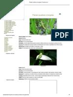 Plantas Acuáticas Emergidas _ Florpedia