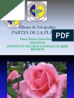 Álbum de Fotografías Flores