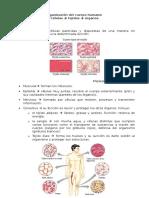 Niveles de Organización de La Materia Orgánica