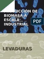 produccion de biomasa.ppt