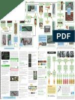 Soilworm Guide