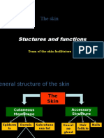 Skin Structure and Functions