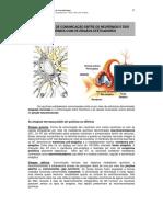 APOSTILA sinapse - UNESP.pdf