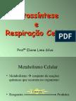 Biologia- Fotossíntese e Respiração celular