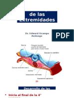 Embriologia de las Extremidades