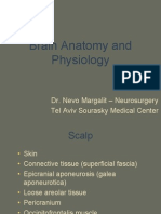 Brain Anatomy & Physiology