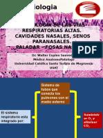 Histologia de la vía respiratoria altas