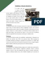 1.2.- ENFERMERIA CUIDADO HOLISTICA.docx